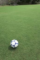 スポーツを支える陰の立役者「芝」 冬でも茶色に変色せず美しい緑を保つ芝の秘密。ケガのリスク軽減にも!
