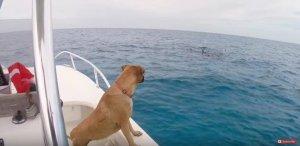 DogGazingAtDolphins