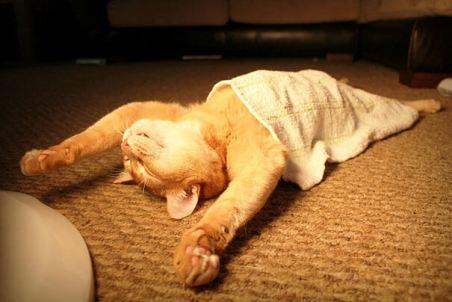 miego kokybė