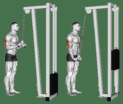 pratimai tricepsui