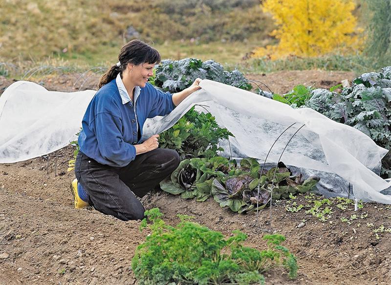Soluții pentru protecția plantelor pe timp de iarnă