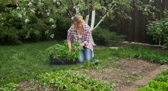Cu ce pornim grădina anul acesta: plante la ghiveci sau semințe?