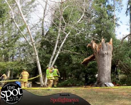 tree down web-9618