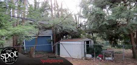 tree down web-9626