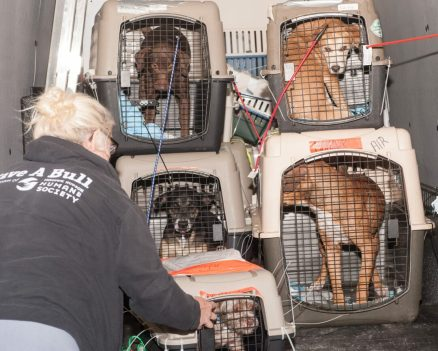 09-07-17 harvey dogs-9174