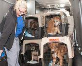 09-07-17 harvey dogs-9178