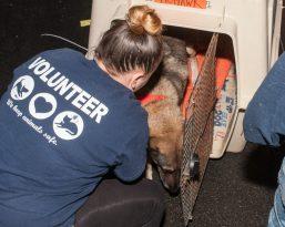 09-07-17 harvey dogs-9179