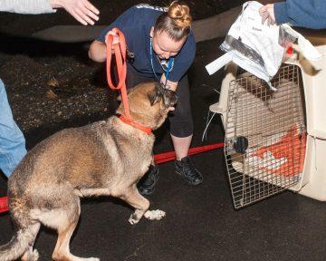 09-07-17 harvey dogs-9180