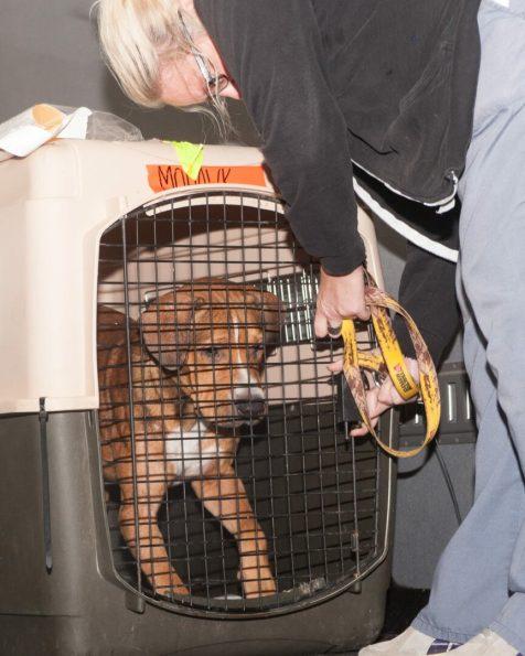 09-07-17 harvey dogs-9191
