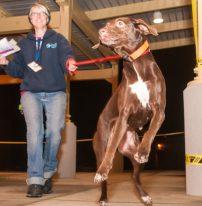 09-07-17 harvey dogs-9201