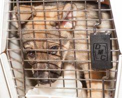09-07-17 harvey dogs-9211