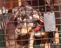 09-07-17 harvey dogs-9226