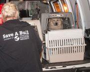 09-07-17 harvey dogs-9266