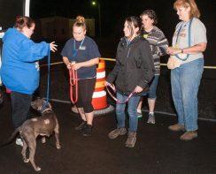 09-07-17 harvey dogs-9272