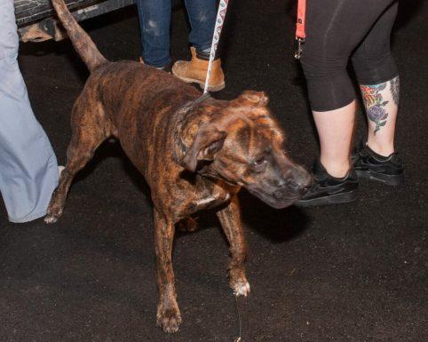 09-07-17 harvey dogs-9273