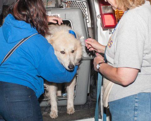 09-07-17 harvey dogs-9275
