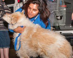 09-07-17 harvey dogs-9281
