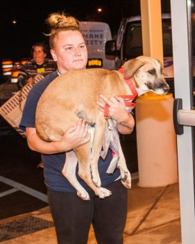 09-07-17 harvey dogs-9338