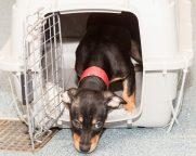09-07-17 harvey dogs-9362