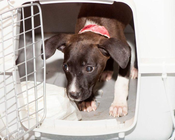 09-07-17 harvey dogs-9370