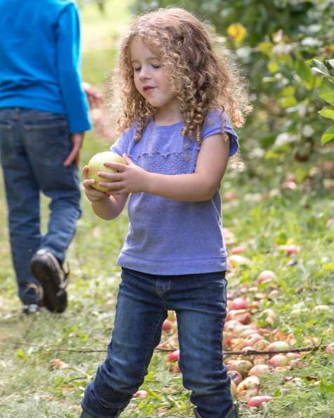 apples web-5171