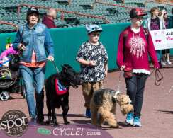 paws in the park-9811