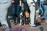 paws in the park-9847