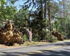 Major storm damage in Bethlehem from Oct 7 storm