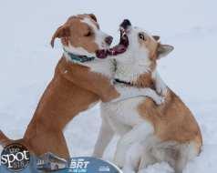 dog park 1-9289