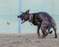 dogpark1-9694