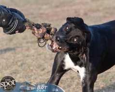 dogparkweb1-9874