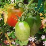 Summer produce is starting to ripen!  Keep fertilizing your job search with communication and follow-up!