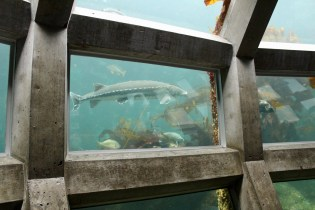 Family Travel Guide – Seattle: Seattle Aquarium – Spousesproutsandme.wordpress.com