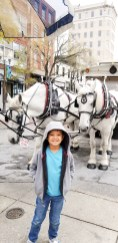 Family Travel Guide: Wilmington, NC - Horse Drawn Tours - www.spousesproutsme.com