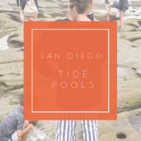 San Diego / / Tide Pools