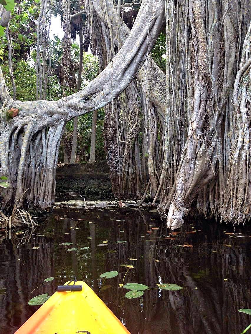 Mystical_Trees
