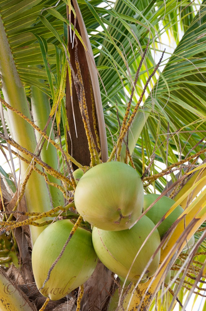 Kruche ciasto z malinami i kokosem - bezglutenowe