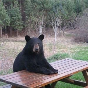 Pa gdje je taj prokleti konobar, čekam ovdje već pol sata... Pa ovdje je stvarno usluga medvjeđa.