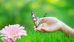 1937195-bigthumbnail butterfly