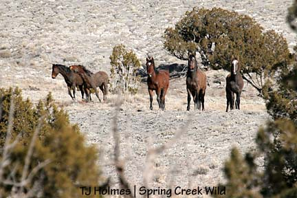 Mesa, muley bay, Aspen, Comanche and Hook