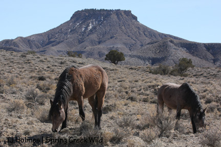 Mouse and Comanche in front of Brumley Point