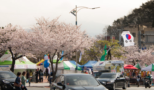 Jinhae Gunhangje Festival (진해군항제) at Jinhae Jungwon Rotary Intersection