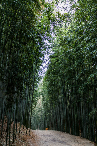 Bamboo Forest Trail