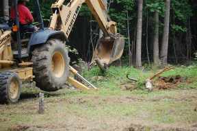 The backhoe made quick work of the stumps.