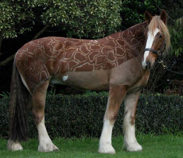 Hot, Hairy Horses