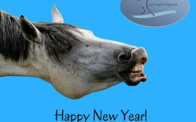 New Years Resolutions and Horses