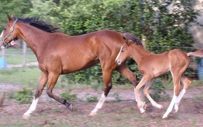 Breeding and Foaling