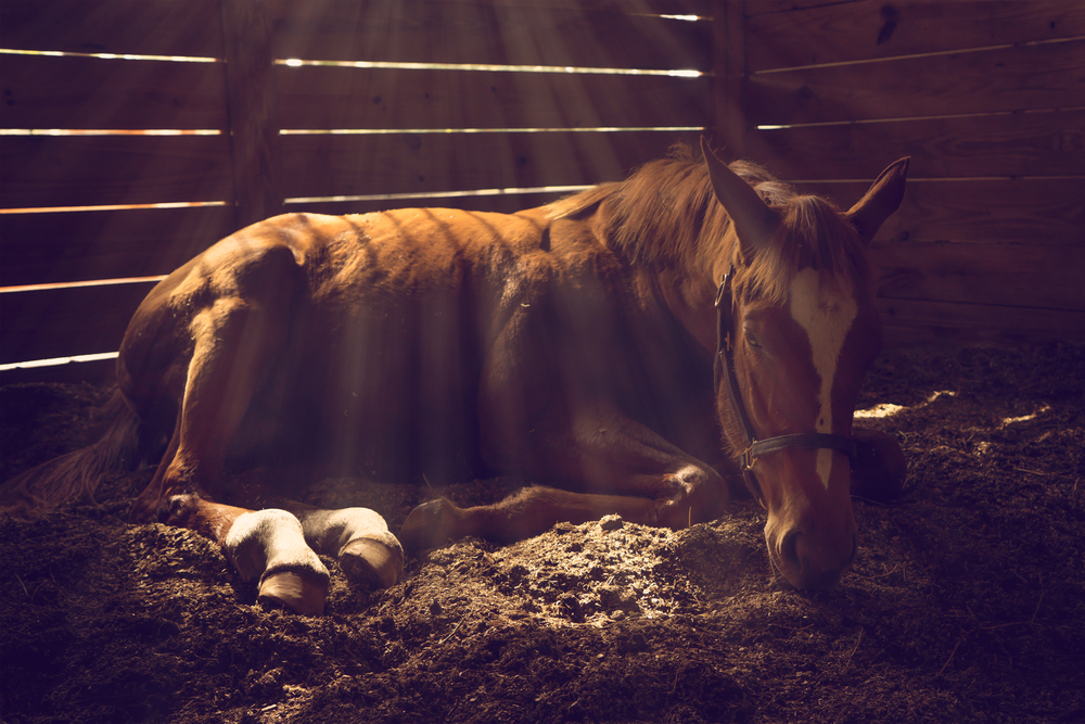 Managing a Colic – Part 2