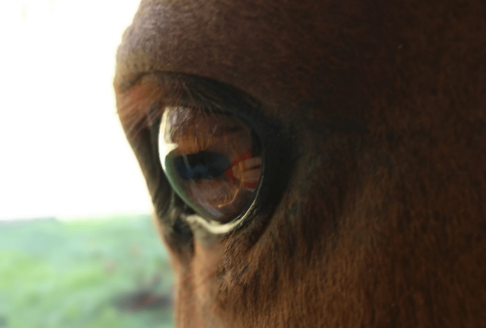 What do horses see?