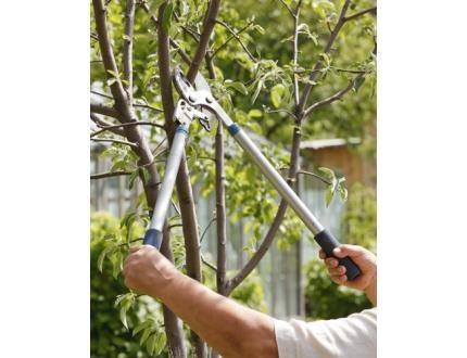koth-Tree-Service2